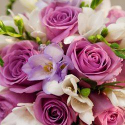 fioletovyj-cvety-rozy-aa04316